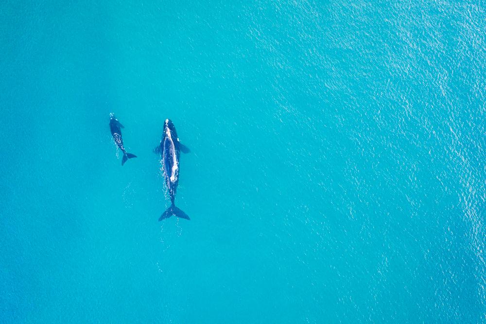 Witsand Südafrika Wale